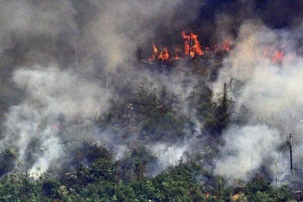 Brazilian President signs decree stopping clearing of land through fire