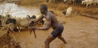 A police based in Marsabit saved animals from drowning